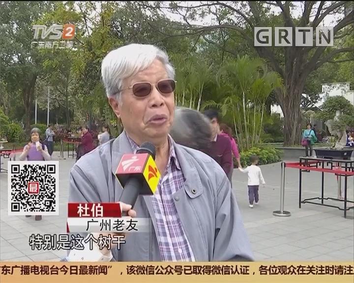 """广州流花湖公园:流芳岭南 中国首棵盆景""""树王""""亮相"""