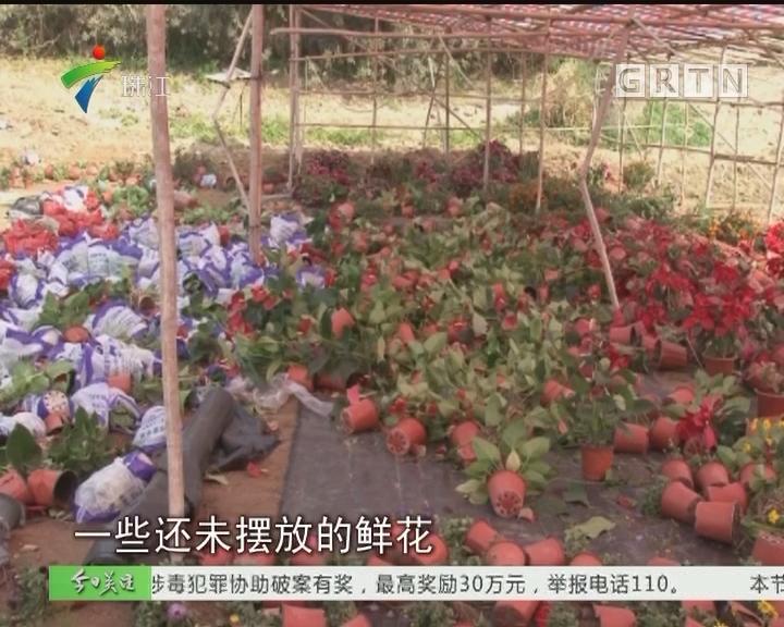 阳江:村办花市开张前夕遭打砸