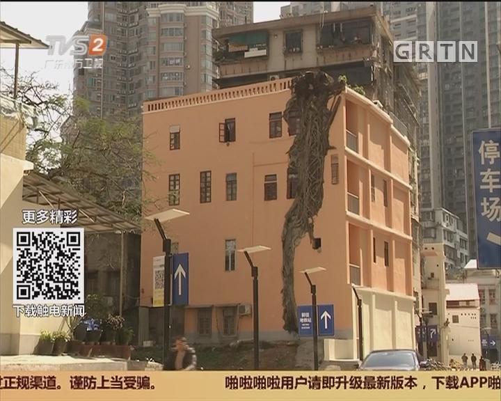 """闹市""""奇观"""":住宅楼被一棵榕树""""劈""""开"""