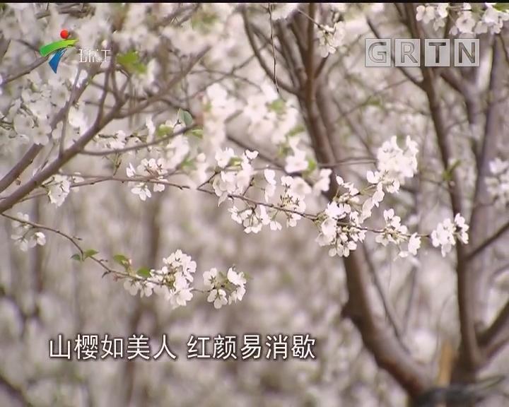 南国深圳花儿俏春意闹