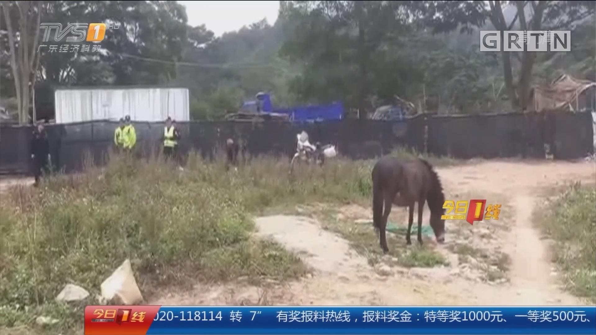 """深圳龙华:脱缰毛驴逆行""""轧马路"""" 交警一路护送"""