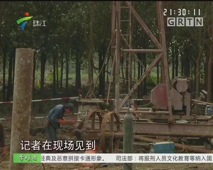 中山:租约未到期树木被清理 村书记:按合同办事