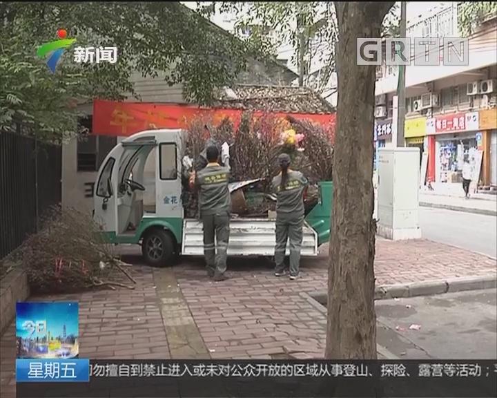 年货再利用:广州设550处年花临时收集点