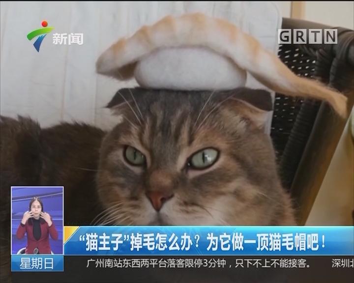 """""""猫主子""""掉毛怎么办?为它做一顶猫毛帽吧!"""