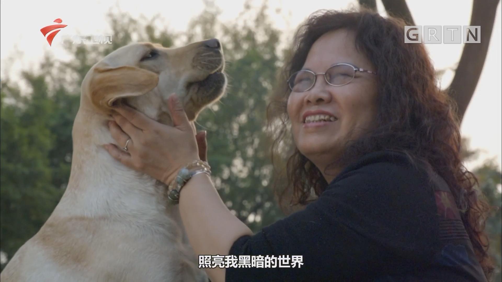 短片《导盲犬多拉的故事》
