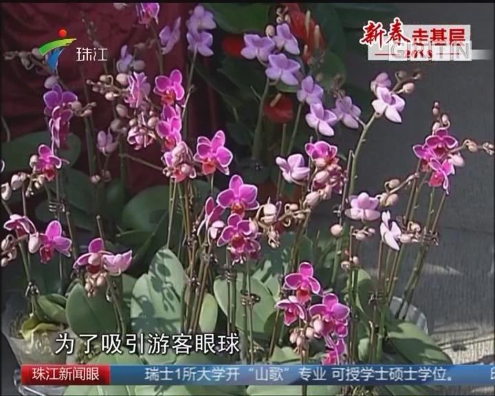 佛山:迎春花市开幕 价格小幅上涨