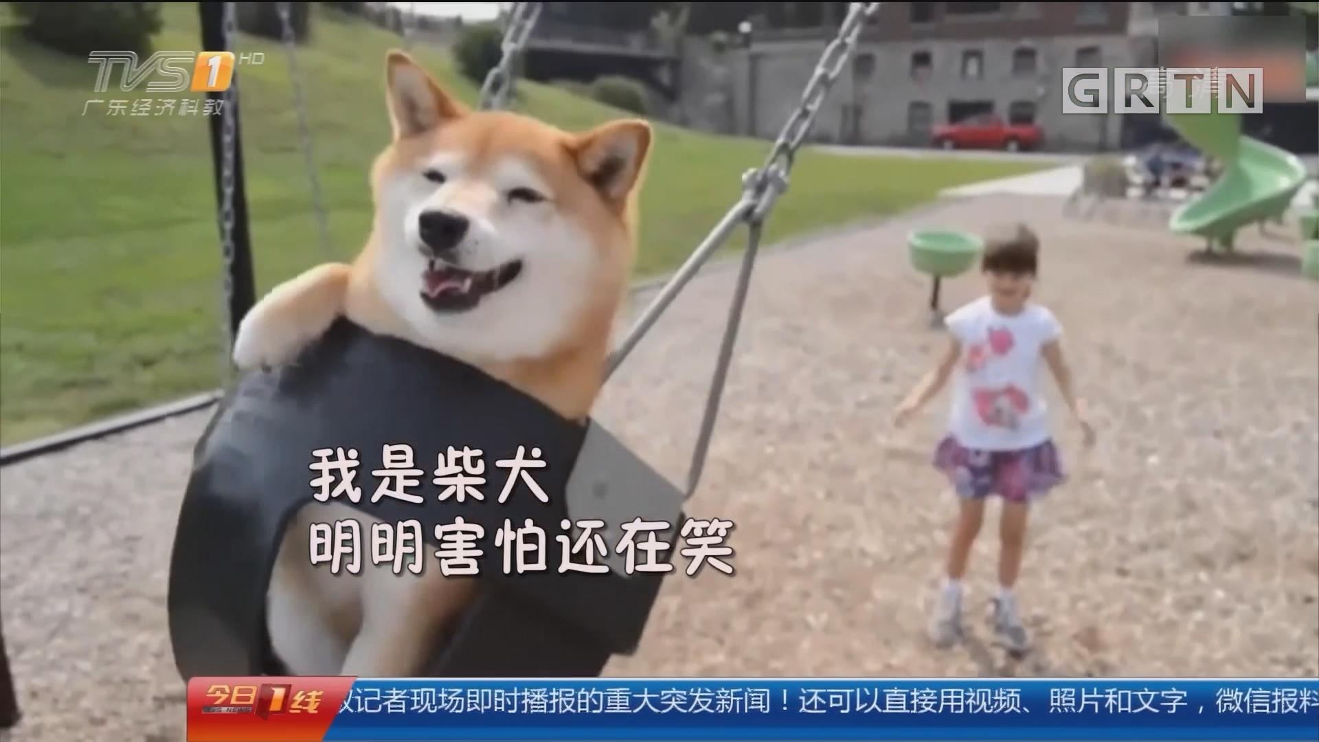 狗狗惹人爱 好玩