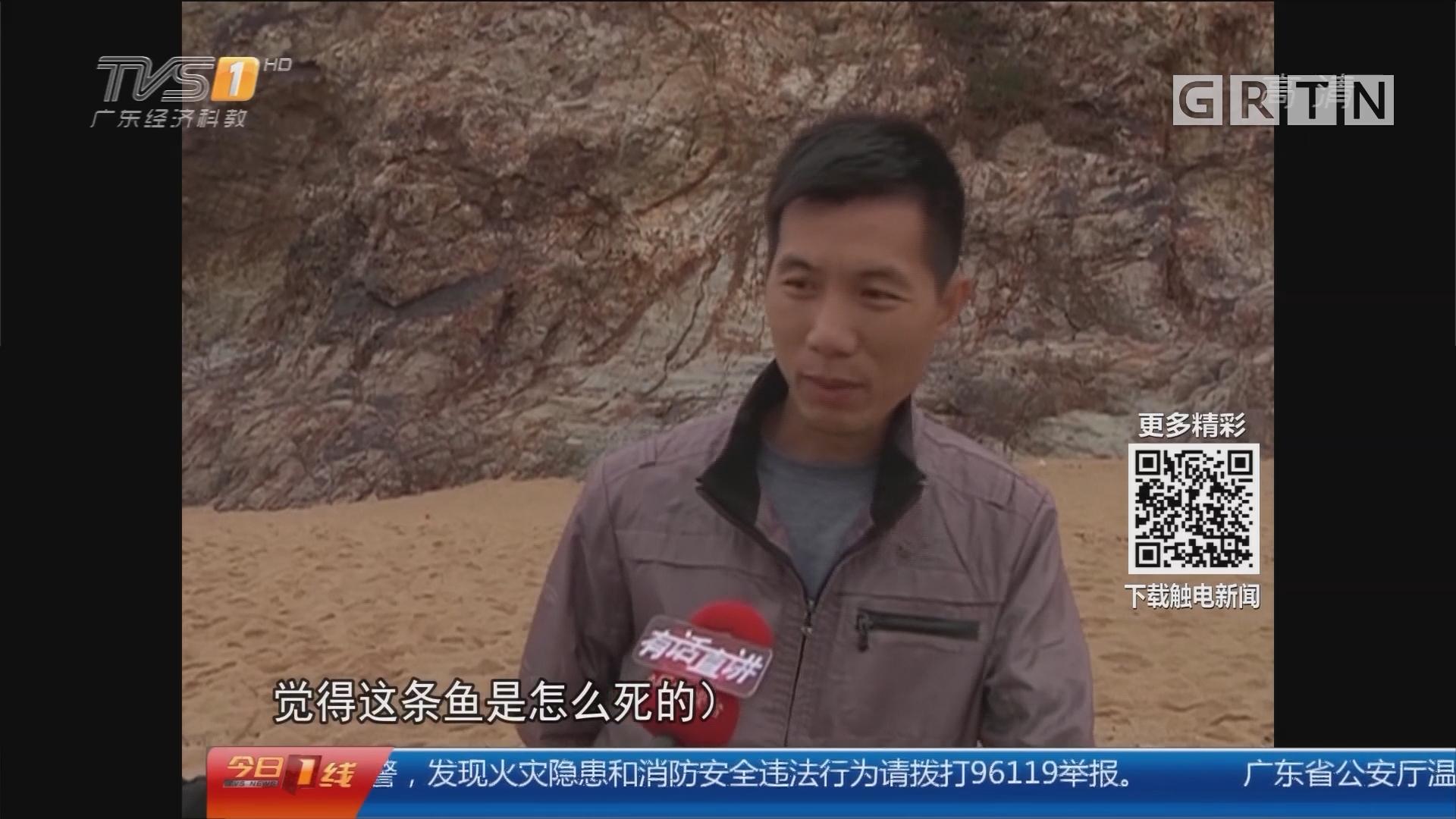 汕尾:海牛鼻头沙滩惊现疑似鲸鱼尸体