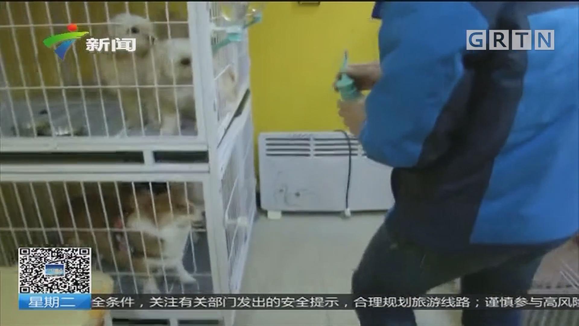 """陕西:宠物寄养火热 宠物宾馆""""一床""""难求"""