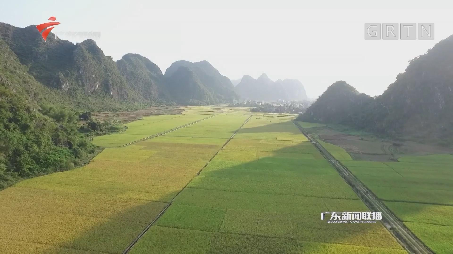 广东:推进农业供给侧结构性改革 农民增收8.2%
