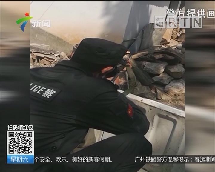 饥饿藏獒发狂撕咬主人 民警6枪击毙