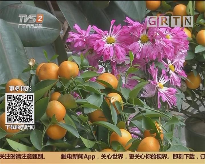 广州:城管委设550回收点 收集废旧年花年桔