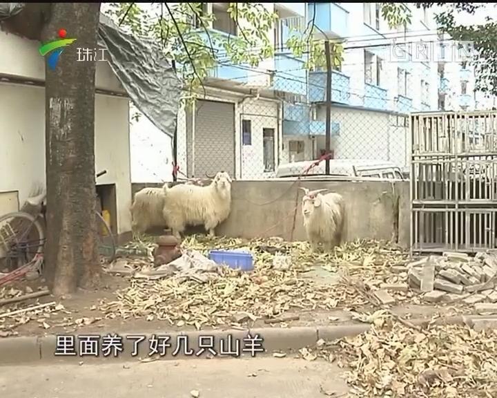 """惊曝芳村体育中心成""""羊圈"""" 记者实地探访"""