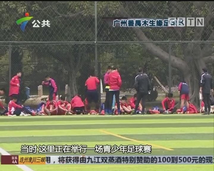 广州:小孩足球比赛 家长教练竟场内打架