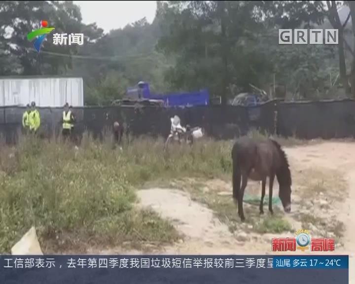 """深圳 龙华:脱缰毛驴逆行""""轧马路""""交警一路护送"""