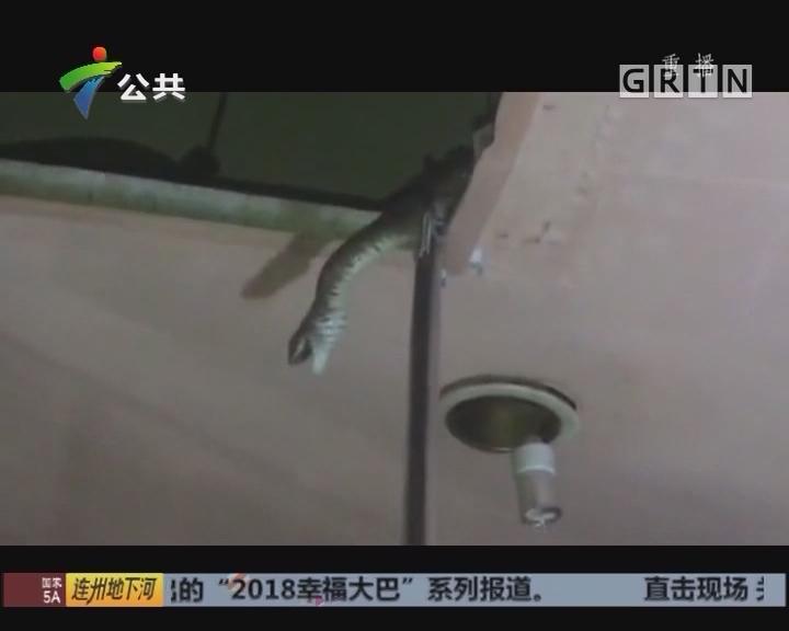 中山:KTV有蛇出没 消防紧急出动