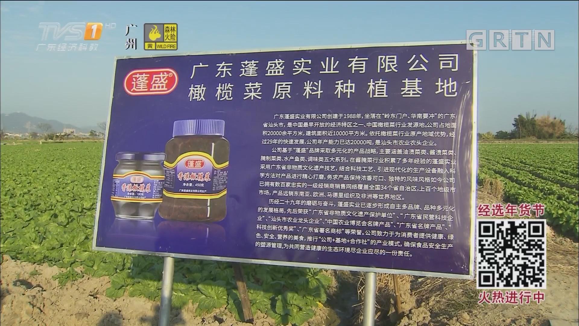 """品味""""杂咸"""" 感受潮汕橄榄菜的魅力(上)"""