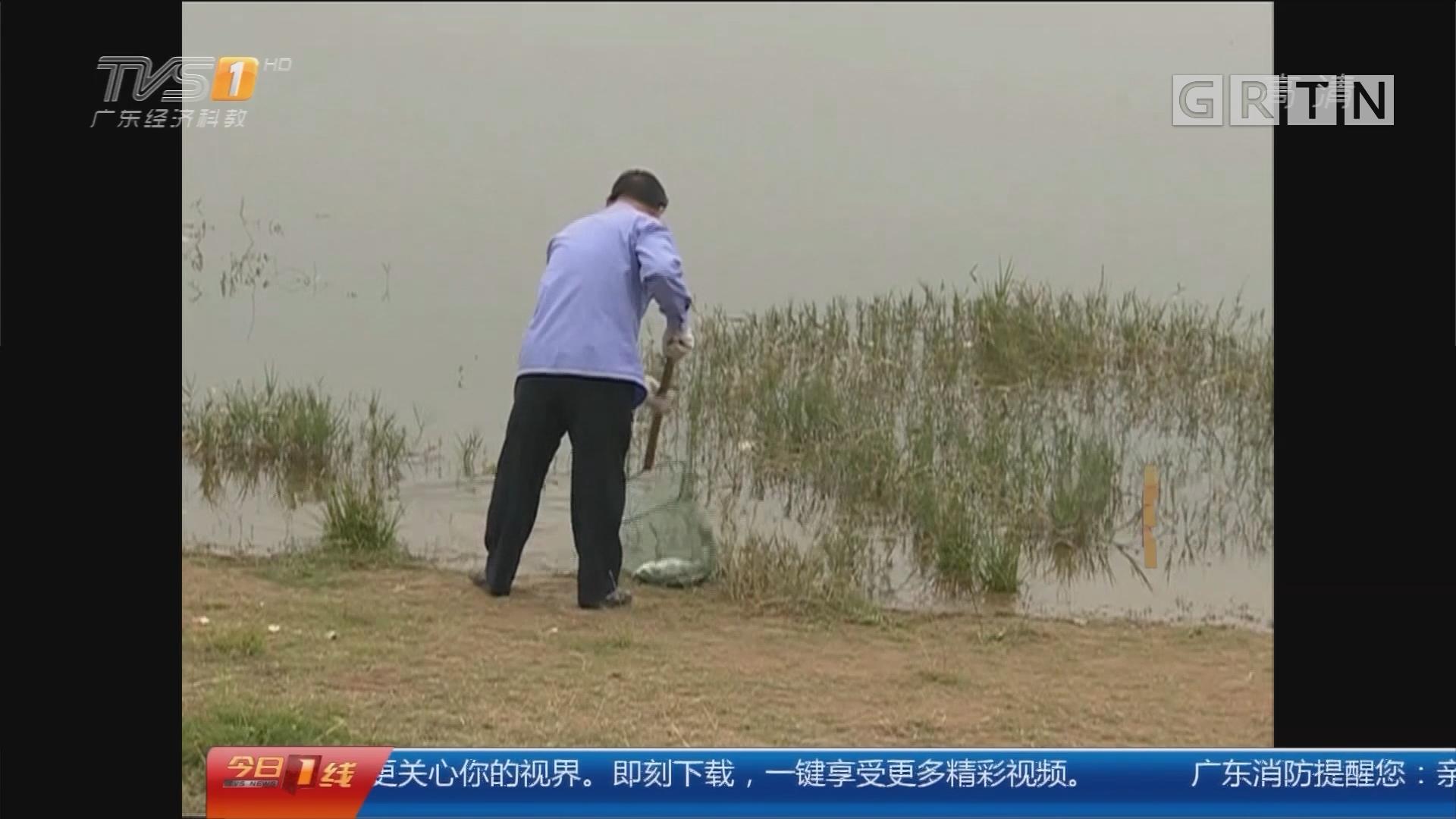 深圳光明新区:多个水库现大量死鱼 恶臭难闻