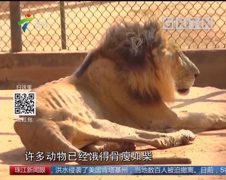 委动物园无钱喂养动物 只能弱肉强食