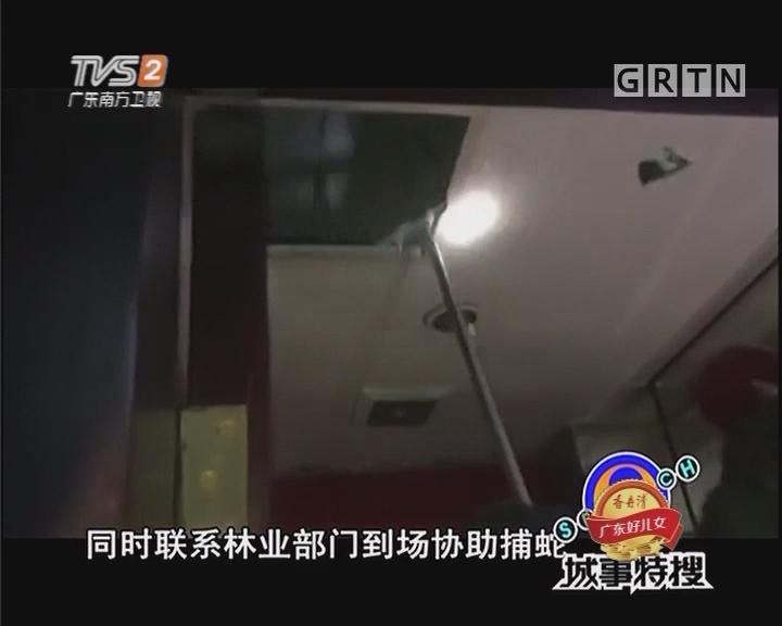 惊!KTV天花板竟有条蛇