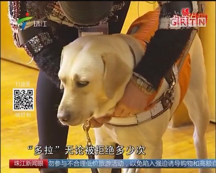 大年初二:首只本土服役导盲犬陪主人过年