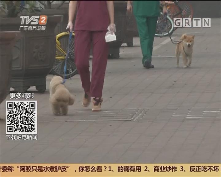 广州:宠物店突结业 寄养狗惨变流浪狗?