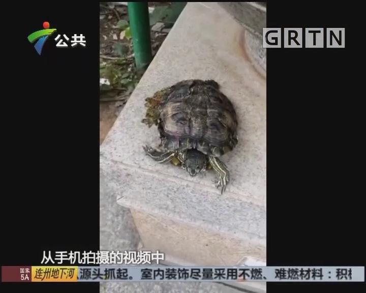 深圳:乌龟从天而降 差点砸中业主