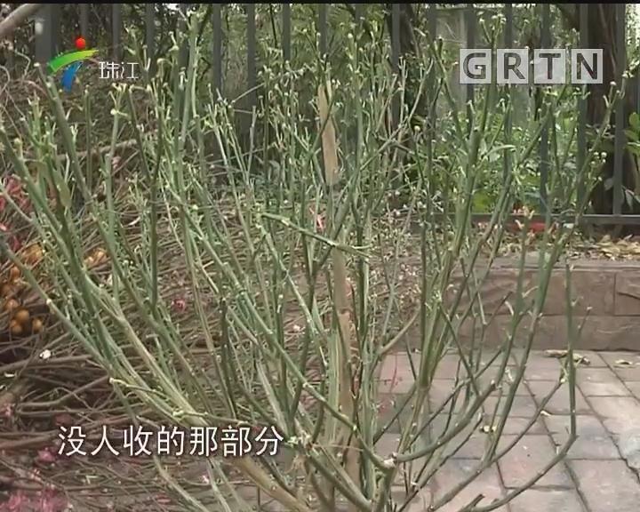 广州设550处年花临时收集点
