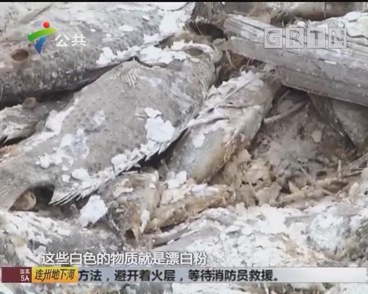 村民求助:万斤死鱼堆积鱼塘旁 恶臭难闻无人清理