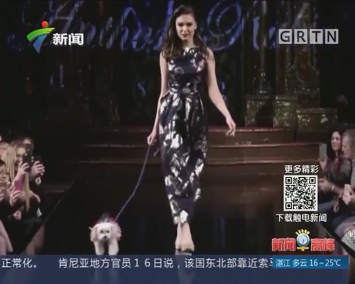 狗年旺旺:美国纽约时装周上演狗狗华服秀