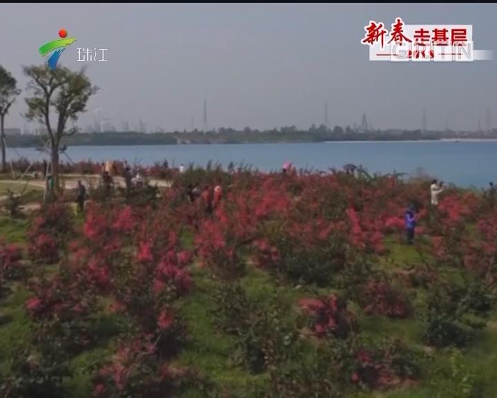 茂名:露天矿区四年改造变身生态公园