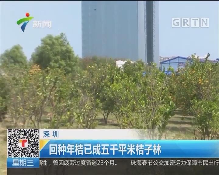 深圳:回种年桔已成五千平米桔子林