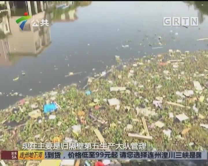 街坊求助:鱼塘漂起大量死鱼 臭气熏到家中来