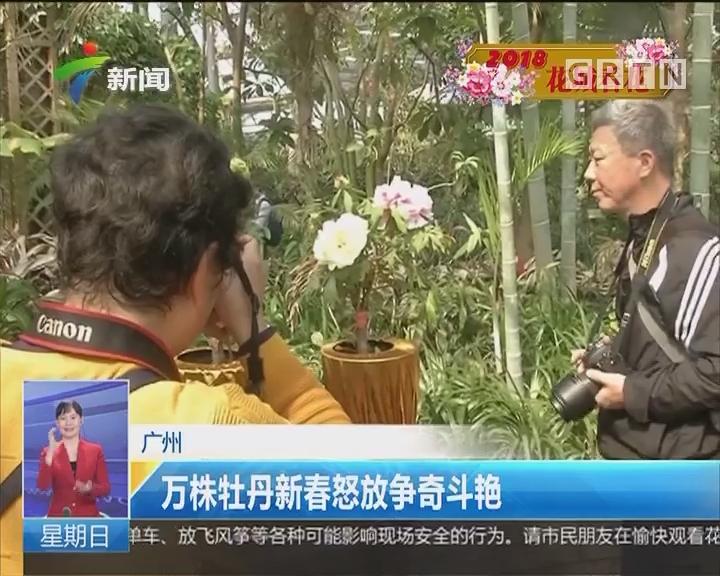 广州:万株牡丹新春怒放争奇斗艳