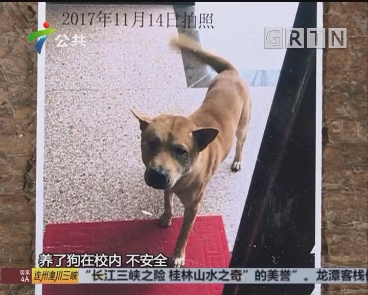 韶关:7岁男童校内被狗咬 背部多处受伤