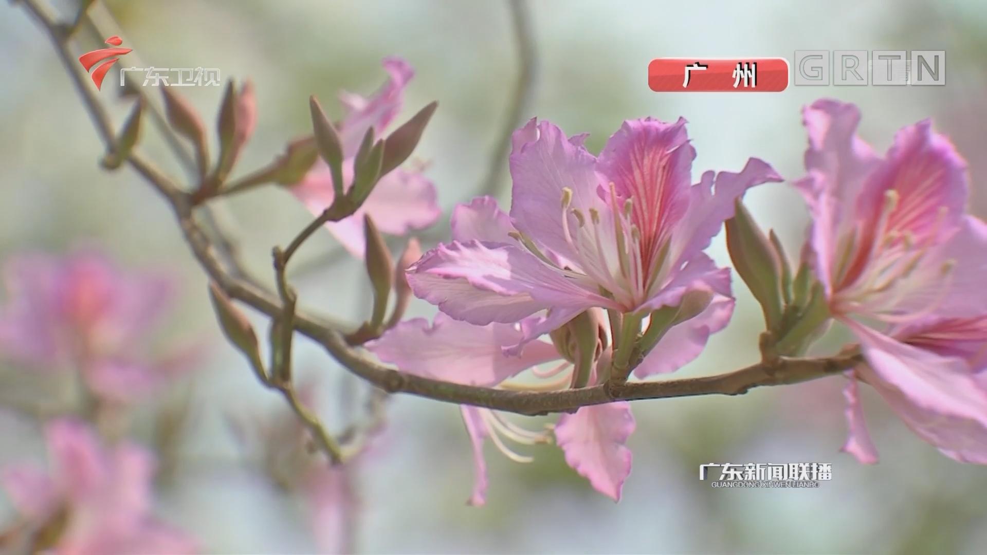 南粤大地春意浓 鲜花朵朵迎客来