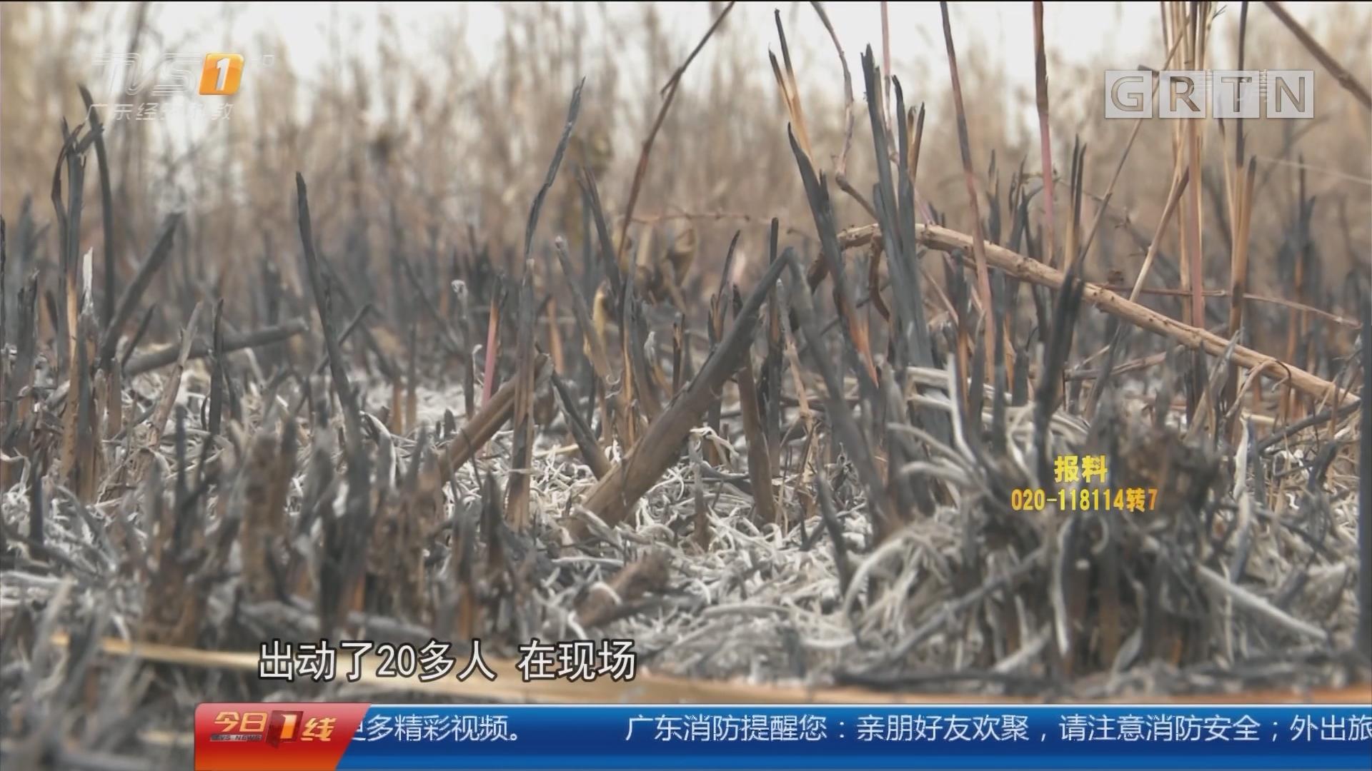 佛山高明:男子纵火烧20亩荒地 称为看剧取暖