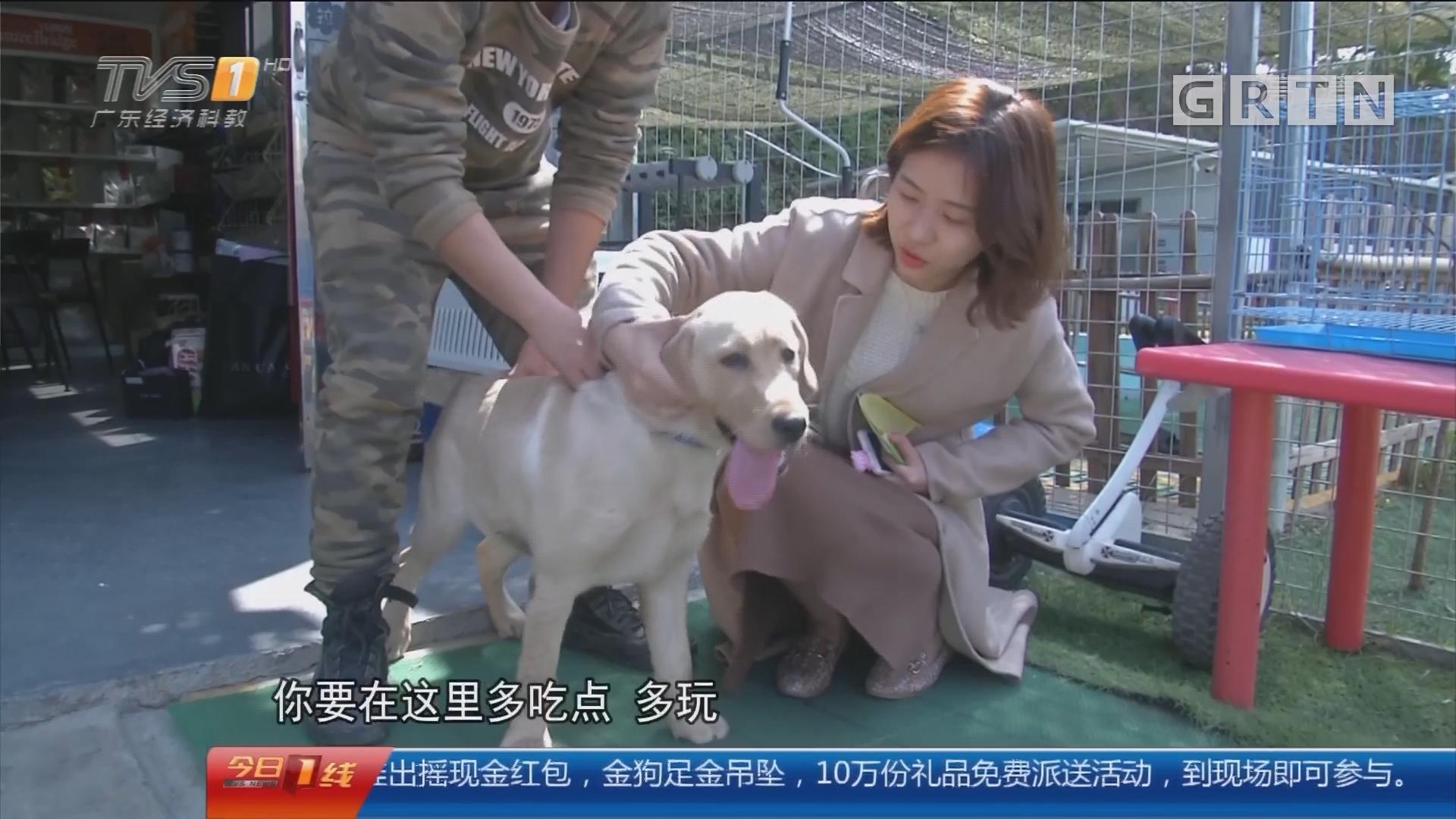 广州天河:主人春节外出 宠物寄养火爆