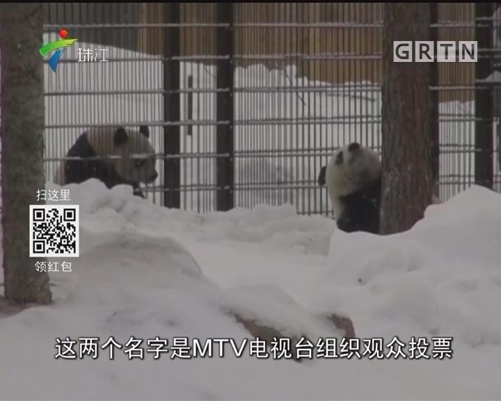 """大雪""""芬""""飞 旅芬大熊猫户外撒欢儿"""