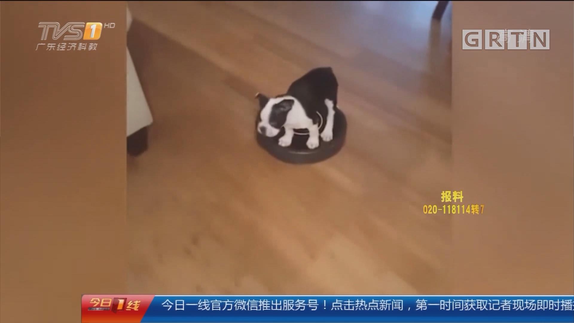 """狗年""""旺旺旺"""":我家狗狗有""""神功"""""""