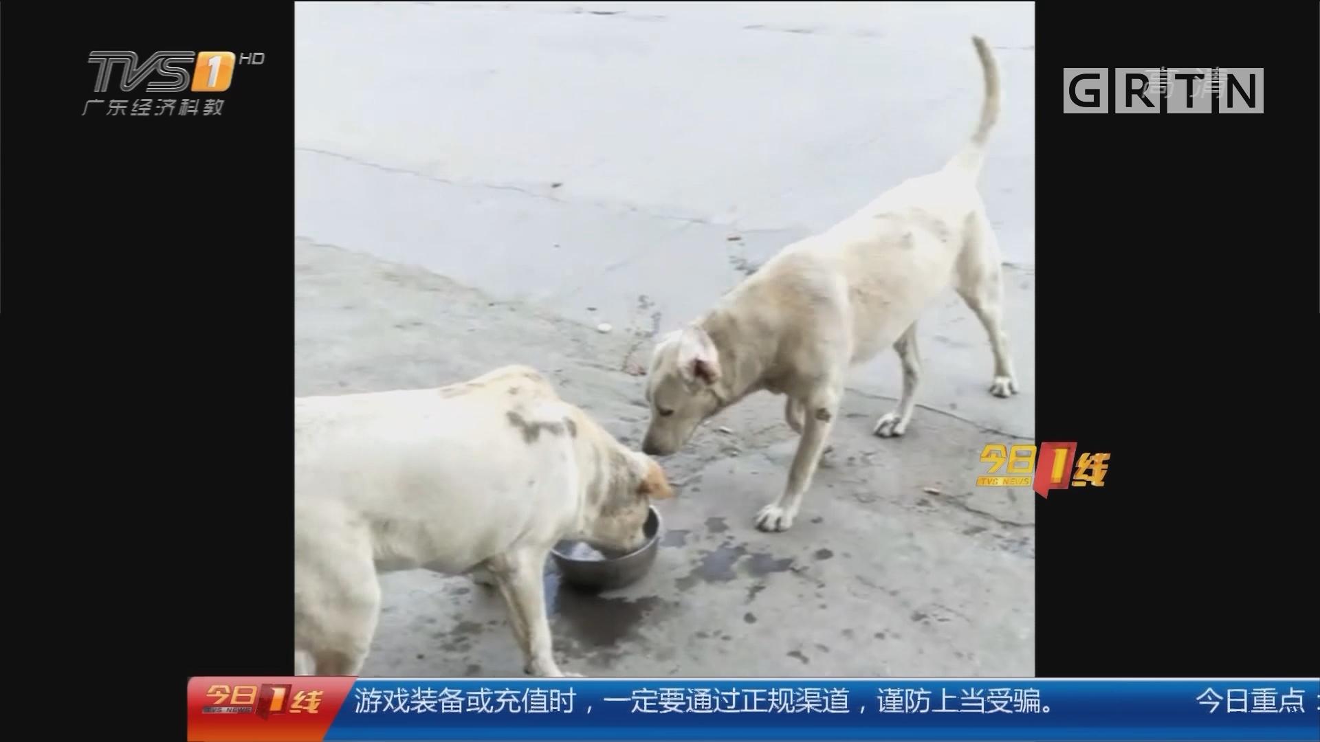 广州:抛绳套狗盗窃 两宠物狗遭毒手