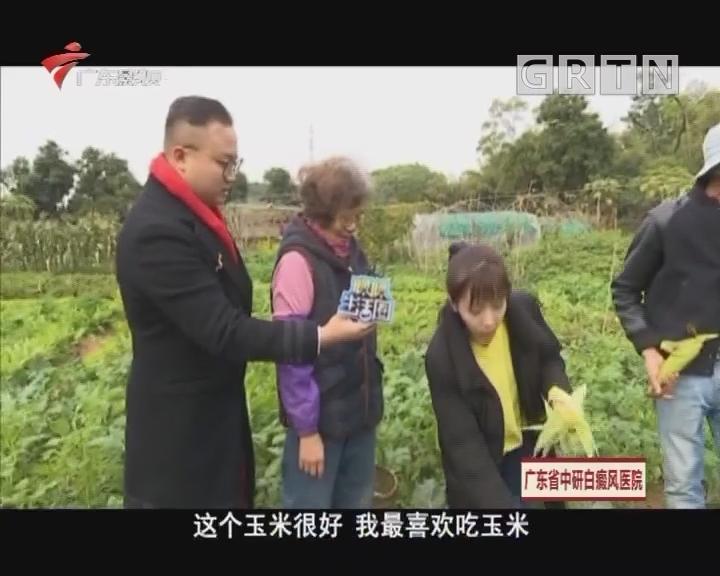 美丽乡镇新春睩 深井古村篇