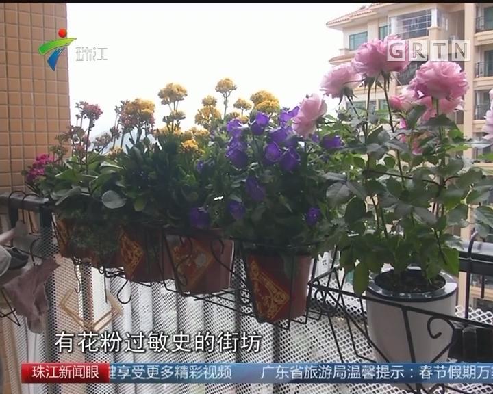 春节买花 小心过敏