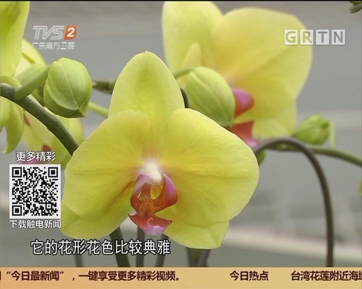 年花行情 兰花:物流放假 蝴蝶兰花价回落