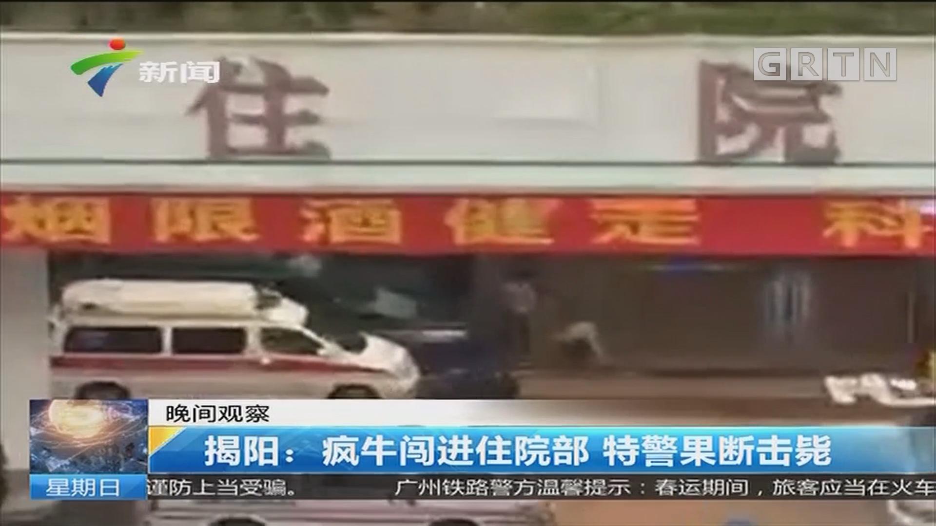 揭阳:疯牛闯进住院部 特警果断击毙
