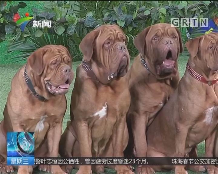 """狗年看""""狗"""":景区百犬迎春图向游客拜年"""