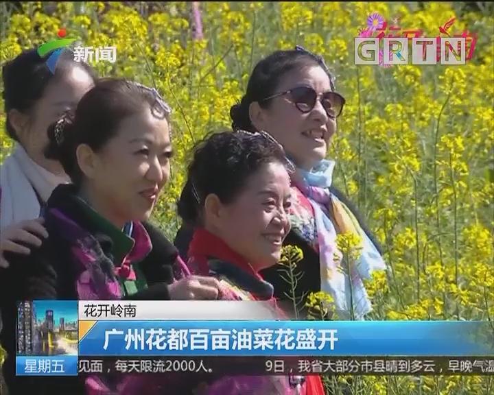 花开岭南:广州花都百亩油菜花盛开