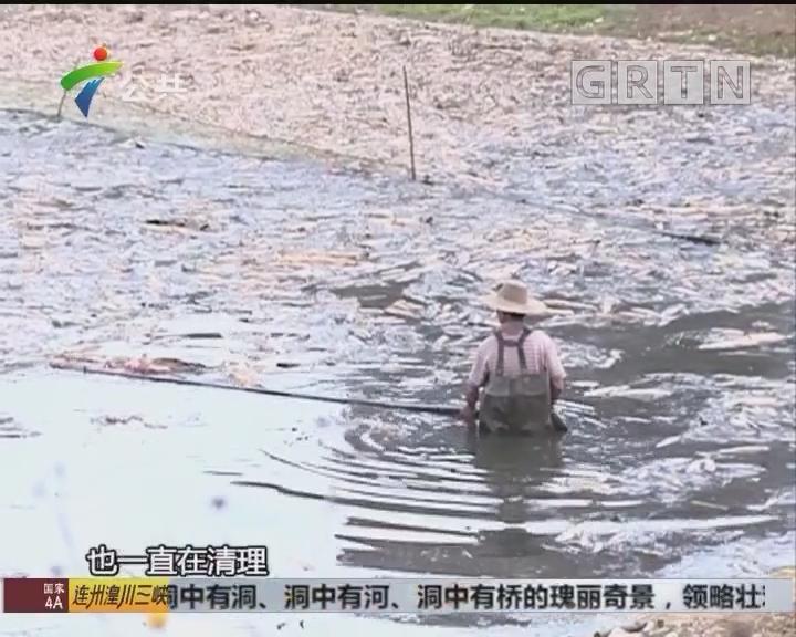 街坊求助:鱼塘浮现大片死鱼 恶臭难顶