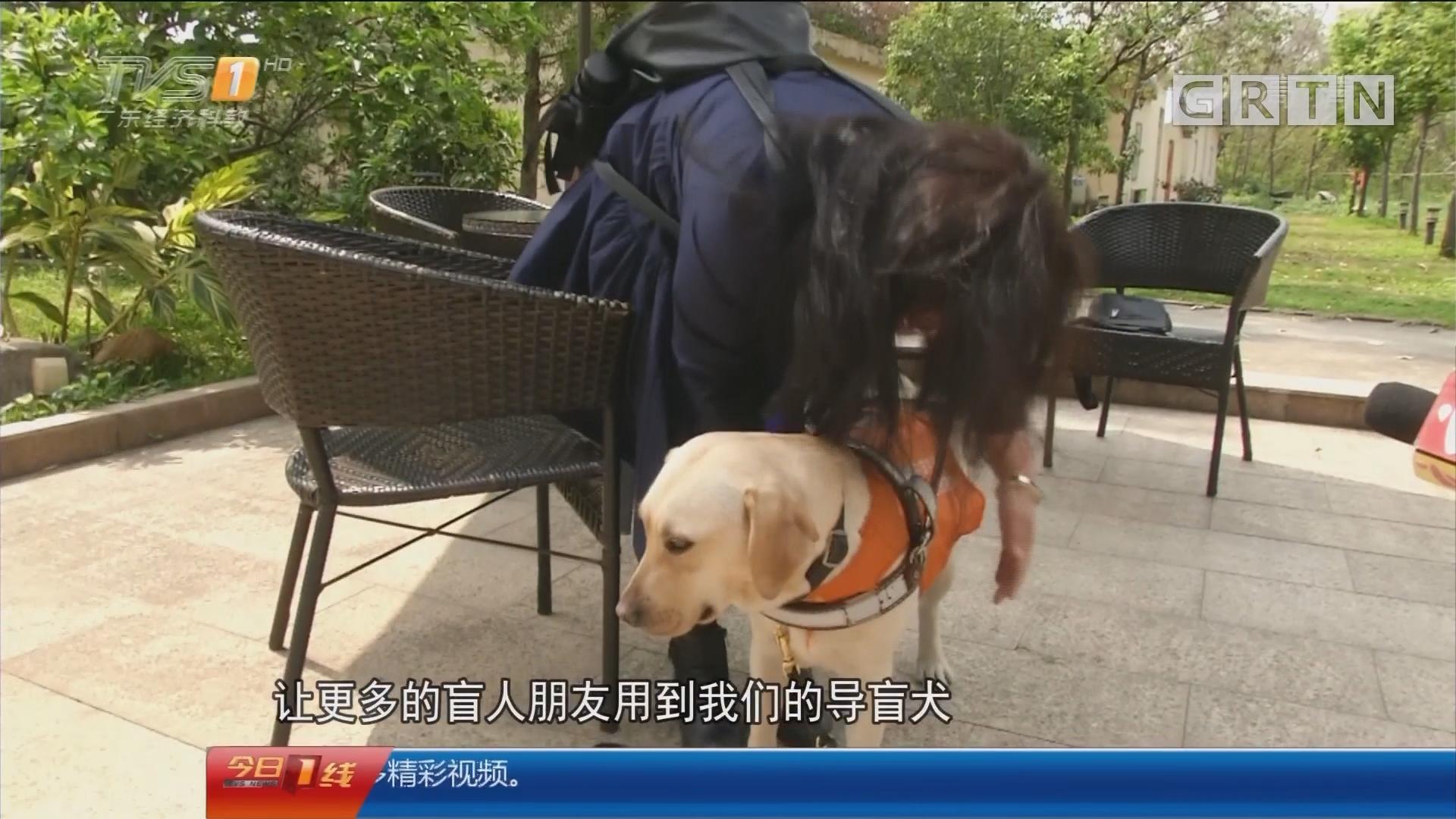 广州:暖心导盲犬 黑暗与光明间的摆渡者