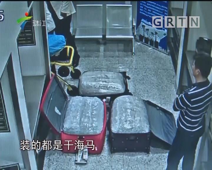 深圳:两旅客走私60公斤干海马 被人赃并获